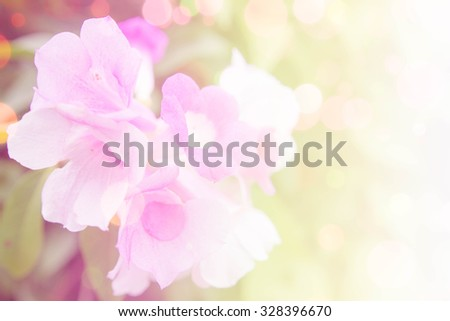 Colorful flower garlic vine as shallow style - stock photo