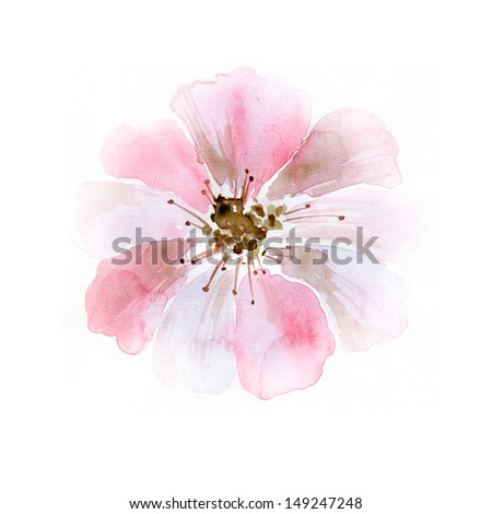 Colorful flower in watercolor paintings - stock photo