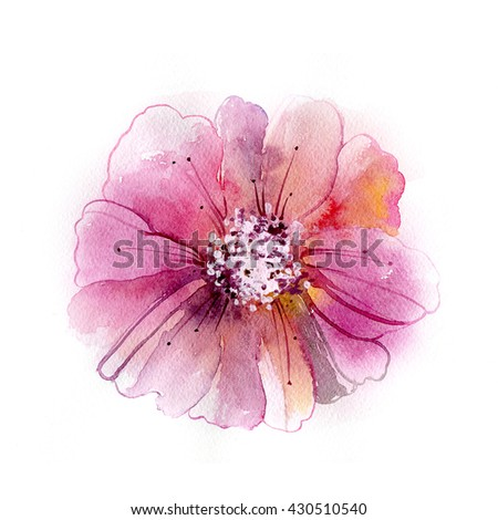 Colorful flower in watercolor paintings. Luxurious pink peony flower painted in pastel colors. - stock photo