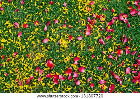 Colorful flower leafs on green grass texture background - stock photo