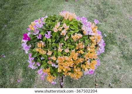 colorful flower / Multi color flower   - stock photo