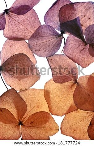 colorful flower petals on white - stock photo