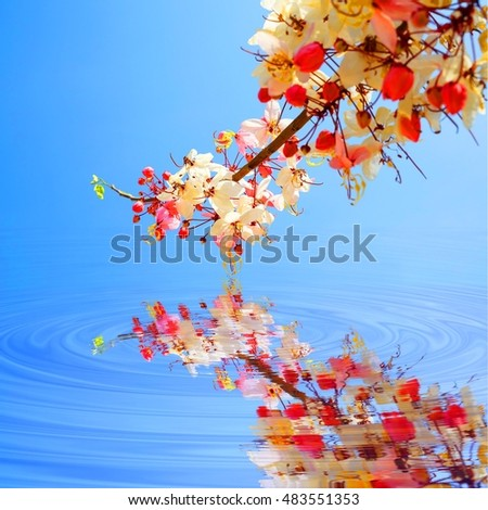 colorful flower with blue sky background and water reflection,select focus with shallow depth of field:ideal use for background