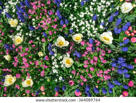 Colorful flowerbed in pink, blue and white in spring. Taken in closeup with a view from above.  - stock photo