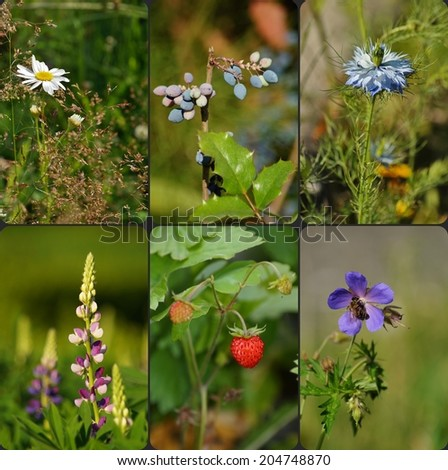 colorful flowers and herbs from fields and meadows and gardens-photo collage - stock photo