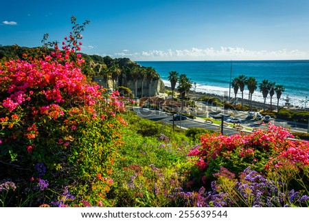 Colorful flowers and view of San Clemente State Beach from Calafia Park, in San Clemente, California. - stock photo
