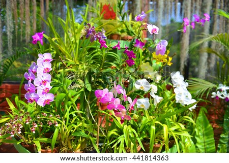 Royal botanical gardens of peradeniya stock images for Sri lankan landscaping plants