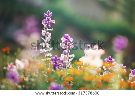 colorful flowers in garden flowerbed. Beautiful outdoor nature photo - stock photo