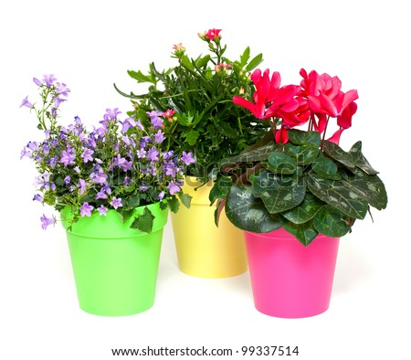 colorful flowers in pots - stock photo