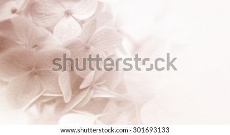colorful flowers in soft and blur style for background