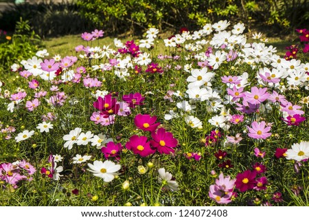 Colorful flowers in the garden - stock photo