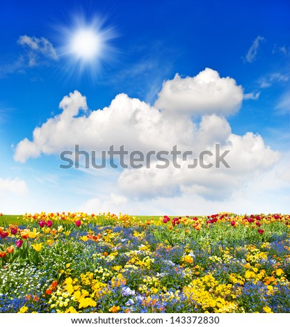 colorful flowers meadow and green grass field over cloudy blue sky