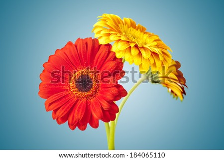 colorful flowers on blue background - stock photo