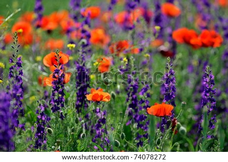 colorful flowers on field in summer - stock photo