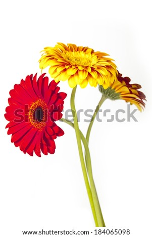 colorful flowers on white background - stock photo