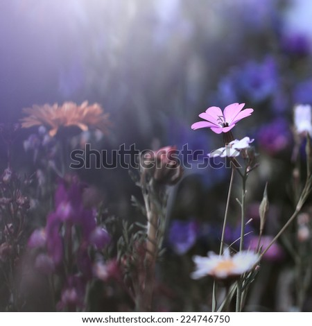colorful flowers vintage background - stock photo