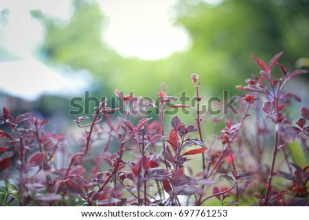 Colorful flowers with natural bokeh background