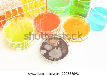 Colorful fluid in glass ware for laboratory use focusing center at colony of yeast with vintage color style - stock photo