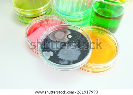 Colorful fluid in petridish for laboratory use focusing center at colony of yeast   - stock photo