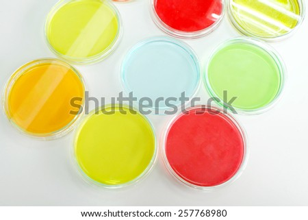 Colorful fluid in petridish for laboratory use on the table in laboratory  - stock photo