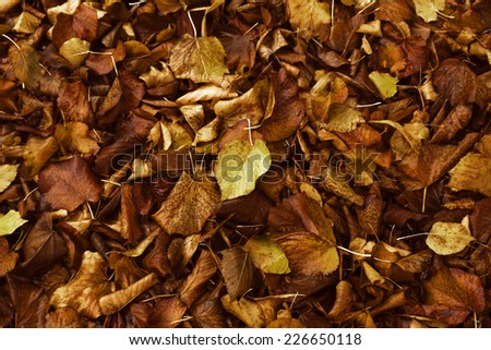 Colorful foliage, Fall seasonal background - stock photo