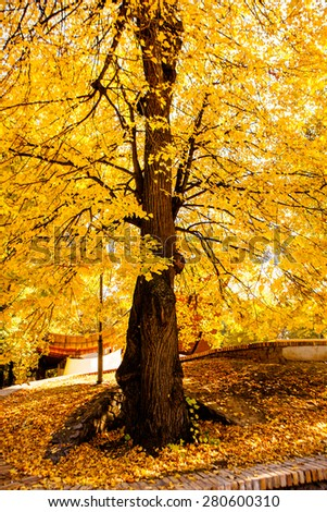 Colorful foliage in the autumn park  - stock photo