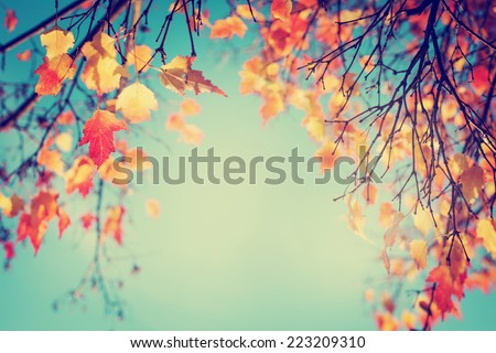 Colorful Foliage In The Autumn Park Leaves Sky Background Trees