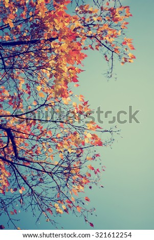 Colorful foliage in the autumn park/ Autumn leaves sky background/ Autumn Trees Leaves in vintage color / selective focus