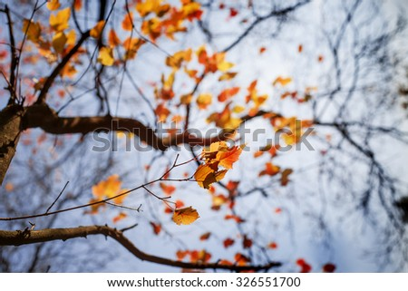 Colorful foliage in the autumn park/ Autumn leaves sky background/ Autumn Trees Leaves in vintage color - stock photo