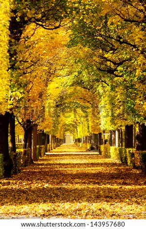 Colorful foliage in the autumn Schoenbrunn Park, Vienna, Austria - stock photo