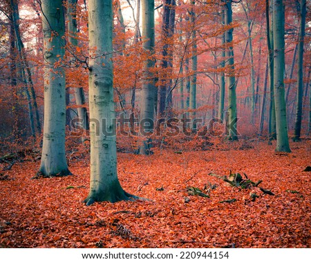 Colorful foliage in the foggy autumn forest - stock photo