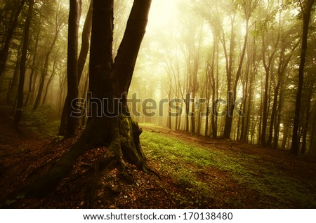 colorful forest at sunset - stock photo