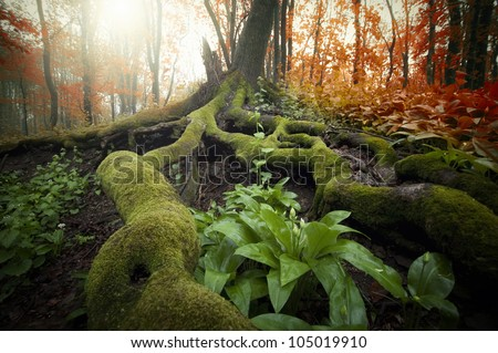 colorful forest in summer with sun beam