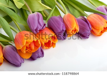 colorful fresh red and orange tulips isolated on white background - stock photo