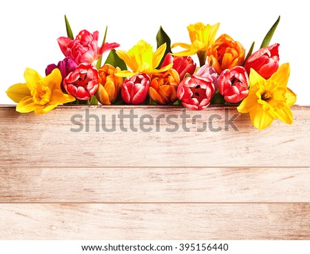 Colorful fresh spring flowers forming a seasonal border isolated on white above a rustic natural wood panel with copy space - stock photo