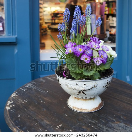 colorful fresh spring primrose flowers in the pot on the wooden table in the street cafe - stock photo