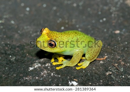 Colorful frog from amazon on the ground - stock photo