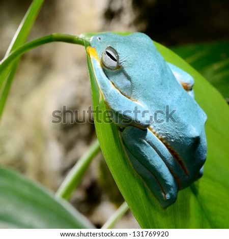 Colorful frog in terrarium