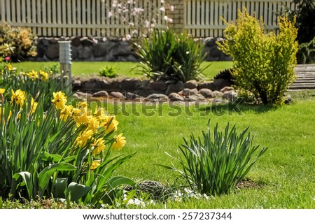 Colorful garden flowers - stock photo
