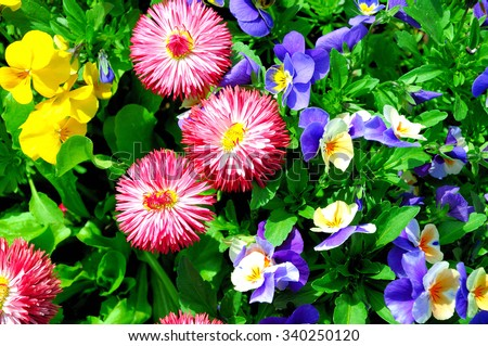 Colorful garden flowers, - stock photo