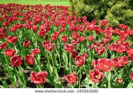 Colorful Garden Vivid Meadow  - stock photo