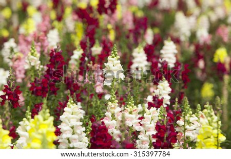 Colorful garden with many kinds of flowers blooming   - stock photo