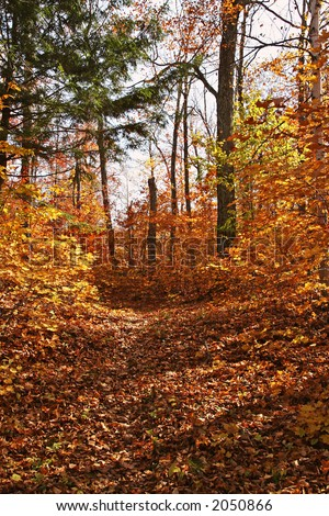 Colorful Gatineau park trail in October - stock photo