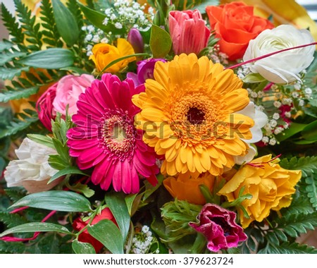 colorful gerber daisy flowers closeup, natural background - stock photo
