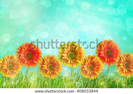 Colorful Gerber flowers against abstract background - stock photo