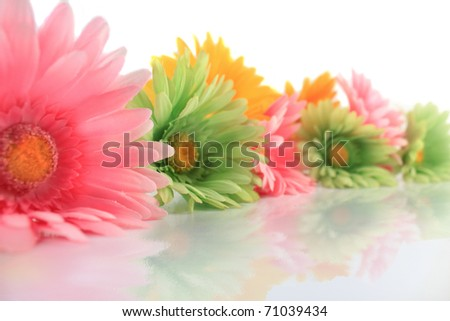 Colorful gerbera daisies on a white background with reflection ( shallow depth of field ) - stock photo