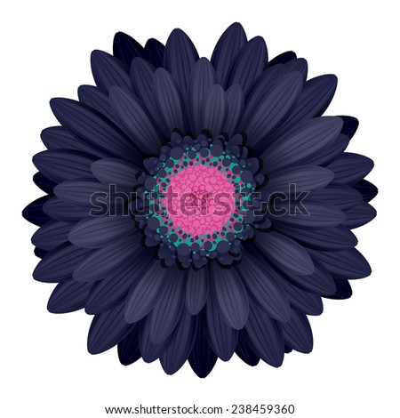 Colorful gerbera flower head - pink and black colors. - stock photo