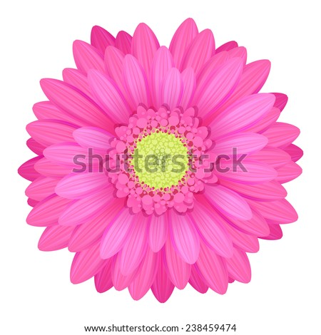 Colorful gerbera flower head - pink and green colors. - stock photo