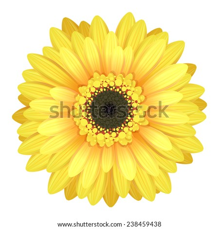 Colorful gerbera flower head - yellow and black colors. - stock photo