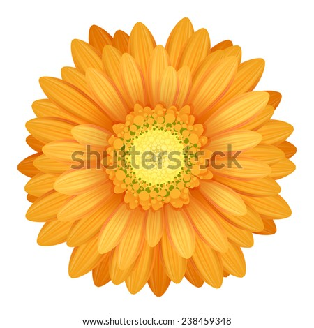 Colorful gerbera flower head - yellow and orange colors. - stock photo